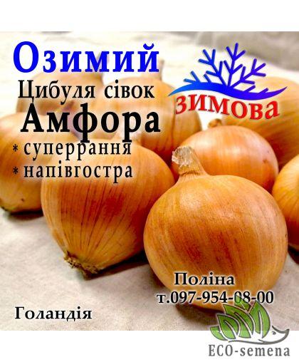 Лук-севок озимый Амфора (Amfora), Голландия, 1 кг