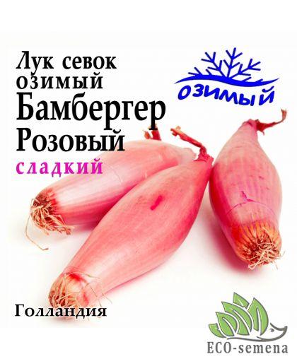 Лук-севок озимый Бамбергер Розовый, Голландия, 0,5 кг