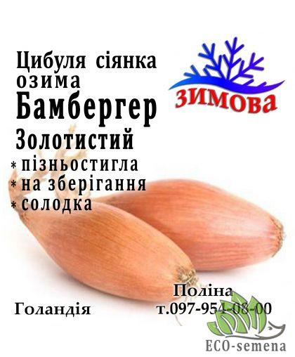 Лук-севок озимый Бамбергер Золотистый, Голландия, 1 кг