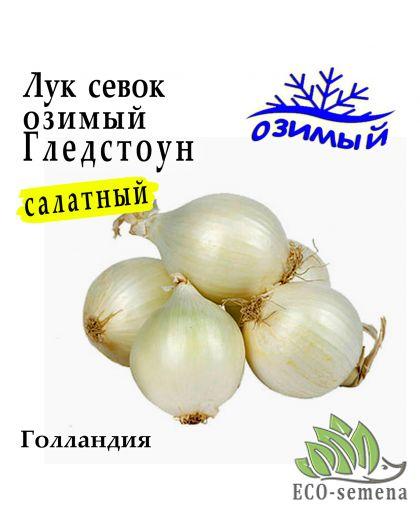 Лук-севок озимый Гледстоун (Gledstone) , Голландия , 0,5 кг