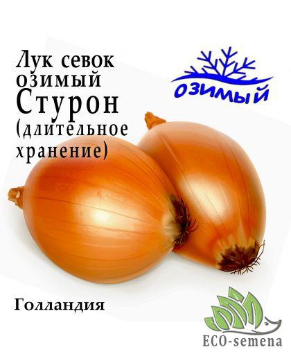 Лук-севок озимый Стурон (Zambezi), Голландия, 1 кг