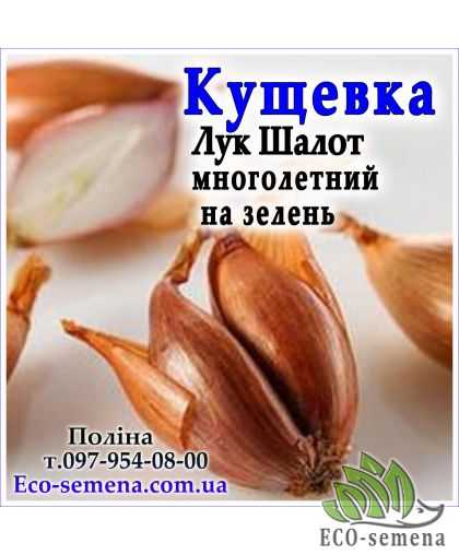 Лук севок Кущевка длинный, Украина, 1 кг