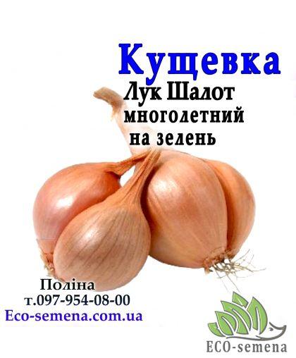 Лук севок Кущевка круглый, Украина, 1 кг
