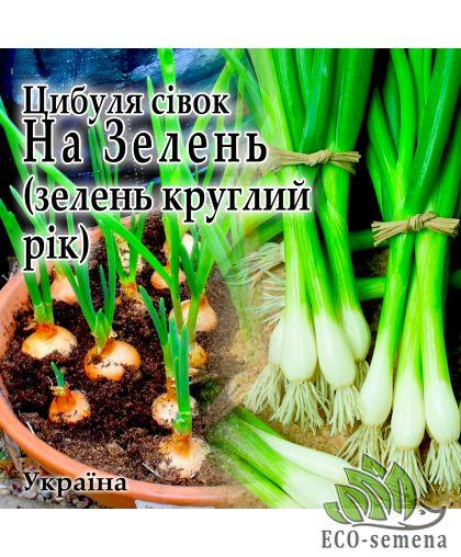Лук севок На зелень (арбажейка), Украина, 1 кг