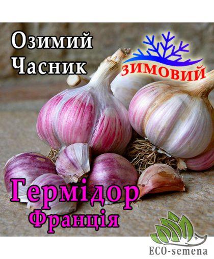 Чеснок севок озимый Гермидор (Germidour), Франция  / 1 кг