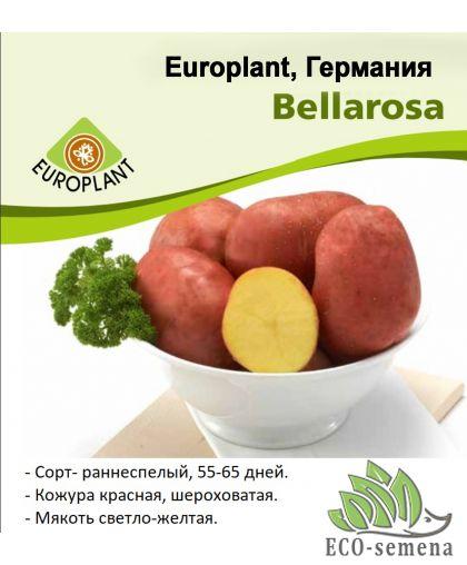 Europlant Германия. Картофель семенной сорт Беллароза (Bellarosа), ранний, 1 кг