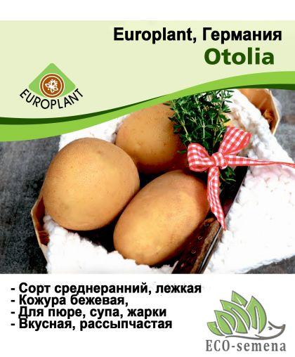 Europlant Германия. Картофель семенной сорт Отолия крупноплодная среднеранняя, 1 кг