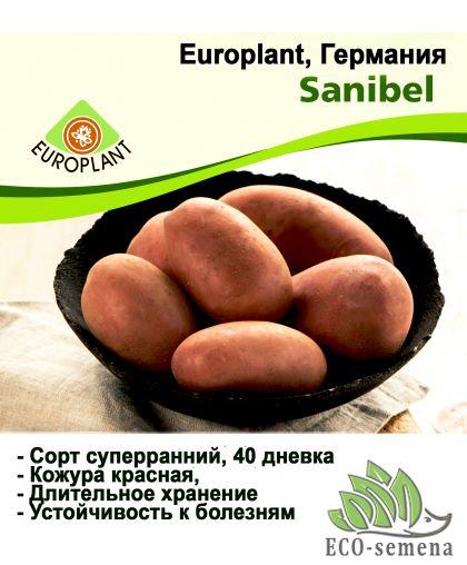 Europlant Германия. Картофель семенной сорт Санибель суперранний 40 дневка, 1 кг