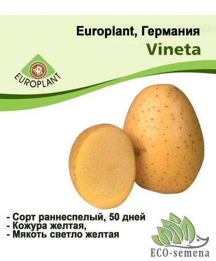 Europlant Германия. Картофель семенной сорт Винетта ранний, 1 кг