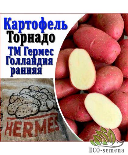 Germes, Голландия. Семенной Картофель Germes Торнадо, 1 репродукция, 1 кг (ранний)