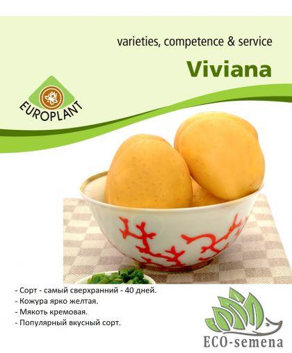 Семенной Картофель Europlant, Вивиана (40 дневка), 1 кг
