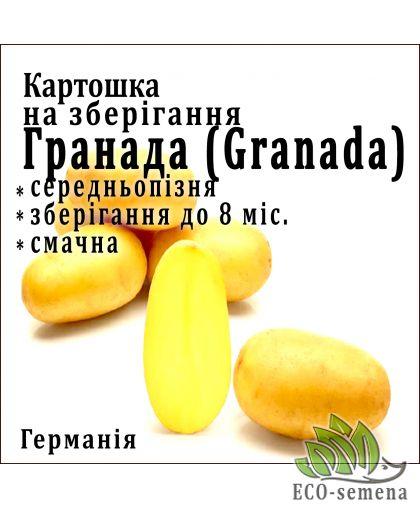 Solana, Германия. Семенной Картофель Гранада (Grаnаdа), 1 кг