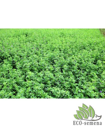 Сидерация - обогащение почвы с помощью растений !