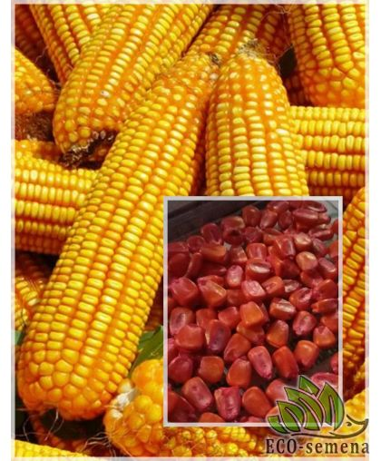 Семена кормовой Кукурузы Даниил, 1 кг