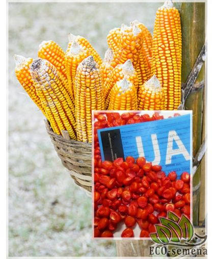 Семена кормовой Кукурузы Днепровский 257 СВ, 1 кг