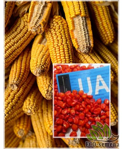 Семена кормовой Кукурузы Любава, 1 кг