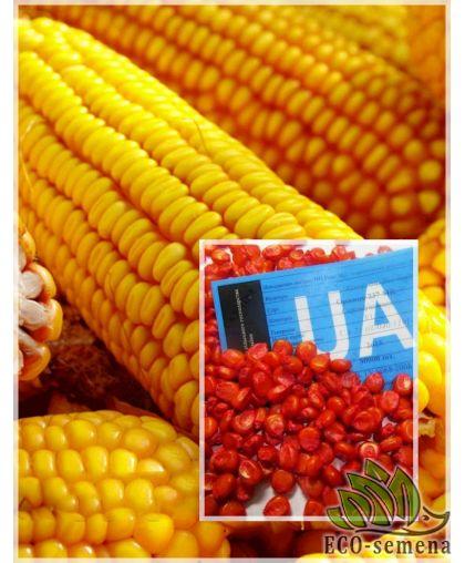 Семена кормовой Кукурузы Манифик, 1 кг
