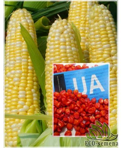 Семена кормовой Кукурузы Оржица 237 МВ F1, 1 кг