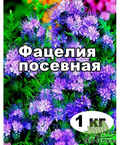 Семена Фацелия, медонос, от 1 кг на развес