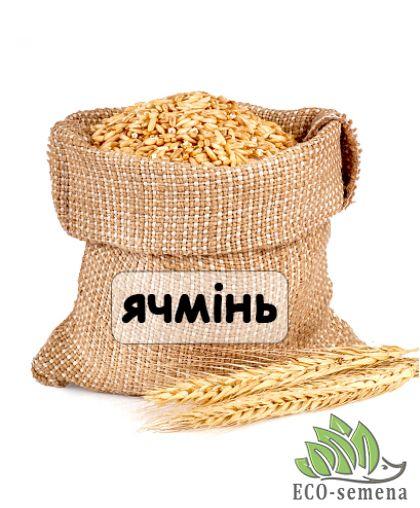 Семена Ячмень посевной, от 10 кг