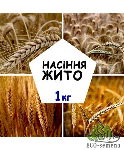 Семена Жито, от 1 кг на развес