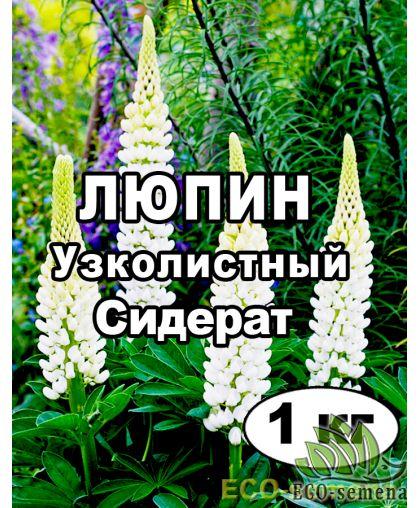 Семена Люпин Белый Узколистный, на сидерат, на развес 1 кг