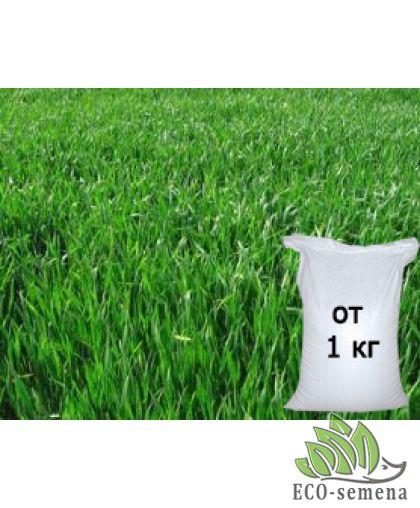 Семена трава Райграс, от 1 кг на развес