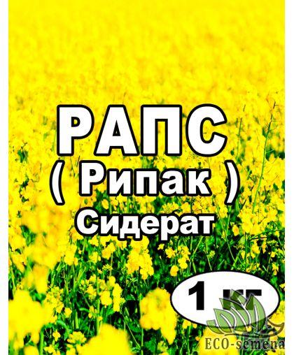 Семена Рапс (Рипак) озимый, на сидерат, от 1 кг на развес
