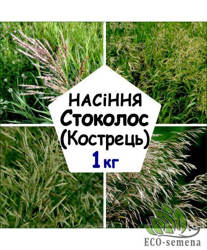 Семена Стоколос (Кострец безостый), от 1 кг на развес