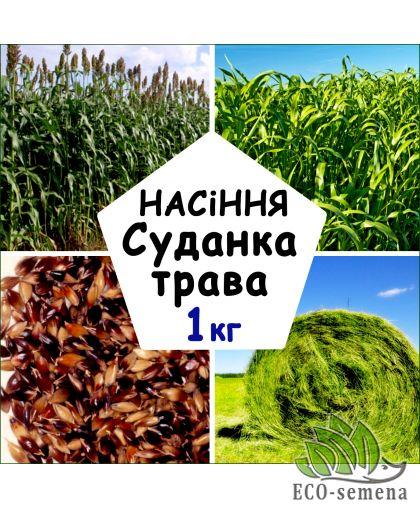 Семена Суданка (Суданская трава), от 1 кг на развес