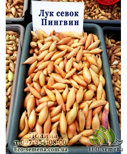 Лук севок Пингвин, Украина, 1 кг