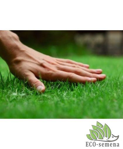 Технология посадки газона